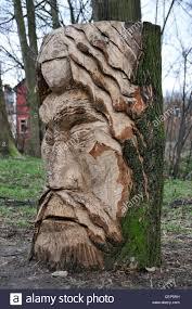tree face viking sculpture wood carving tree stump cut carving beard face