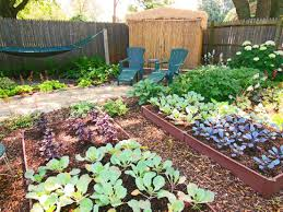 outdoor and patio cute small backyard vegetable garden ideas
