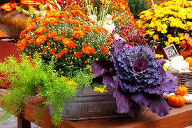 fall garden flowers gardening ideas