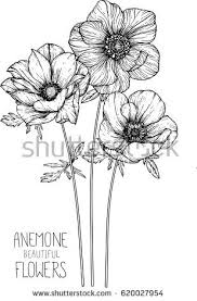 wedding flowers drawing wedding flowers by season beautiful anemone flowers drawing vector