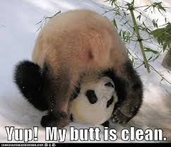 best of 20 memes de pandas testing testing