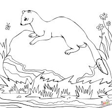 american polecat coloring page free printable coloring pages