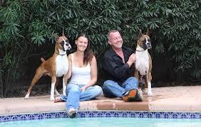 boxer dog utah boxer breeder arizona south willow boxers
