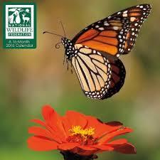 national wildlife federation cards lizardmedia co