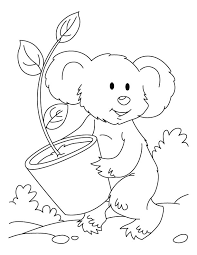 koala eucalyptis plant coloring pages download free koala