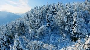 winter snow covered trees nature beautiful mountain drone footage