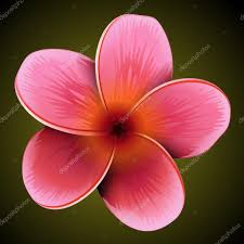 plumeria flower plumeria flower stock vector kolopach 18466257