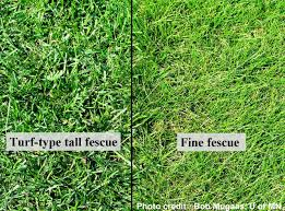 Type Of Grass For Garden Sulis Sustainable Urban Landscape Information Series University