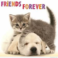 Cute Best Friend Memes - best friends forever quotes images and friends wallpapers