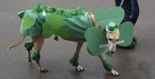 17 dogs better at st patrick u0027s day than you are