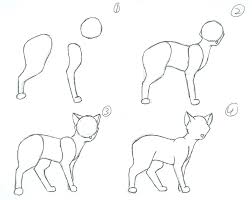 how to draw a cat part 1 by hawkfire11111 on deviantart