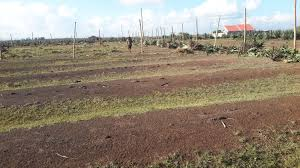 juja town 50 by 100 plots for sale 5 km from thika superhighway