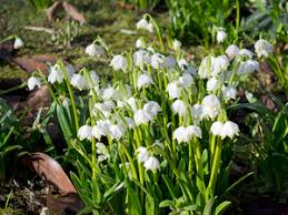Snowflake Flower - free stock photos rgbstock free stock images spring