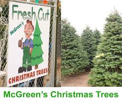 Fresh Cut Christmas Trees At Menards by Fresh Christmas Trees Best Images Collections Hd For Gadget