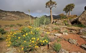 South African Wild Flowers - farmers reap benefits of improved grazing practices conservation
