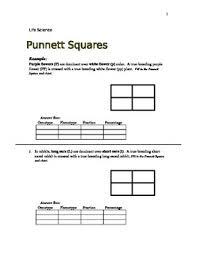 punnett square practice word problems  life science grade   tpt with punnett square practice word problems  life science grade  from teacherspayteacherscom