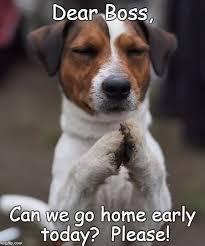 Praying Memes - praying dog meme generator imgflip