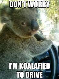 Koala Bear Meme - koalafied koala meme