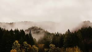 free photo trees fog mountains oregon forest max pixel