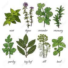 les herbes aromatiques en cuisine les herbes aromatiques en cuisine le bouquet garni base de et de