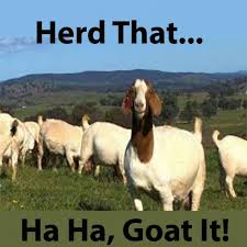 Funny Goat Memes - funny goat quotes 盪 pun quotes