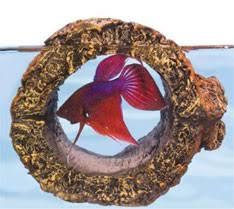 Betta Fish Decorations Top 10 Ideas For Betta Fish Toys Don U0027t Have A Bored Betta