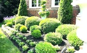 Bushes For Landscaping Colorful Bushes For Landscaping Best Small Landscape Bushes