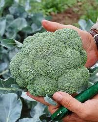 Fall Vegetable Garden Ideas by Best 25 Fall Planting Guide Ideas On Pinterest Fall Planting