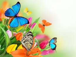 flowers colorful spring butterflies tulips fresh beautiful flower