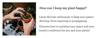 how to make a plant love you houseplant masterclass by summer