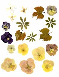 pressed flowers pressed flowers they been in the flower press for at flickr