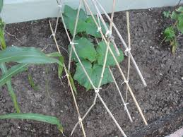 build a garden trellis diy garden trellis brilliant ideas of cucumber trellis diy