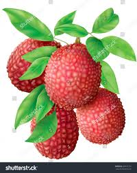 lychee fruit peeled bunch lychee fruits leaves on white stock vector 624141710