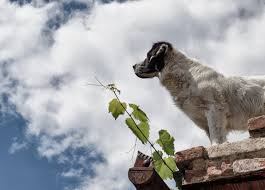 dog standing on the roof free stock images by libreshot