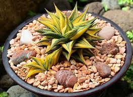 Indoor Plant Arrangements 40 Best Plants I Have Images On Pinterest Succulent Plants
