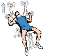 Bench Press With Dumbells - incline dumbbell bench press for chest workout