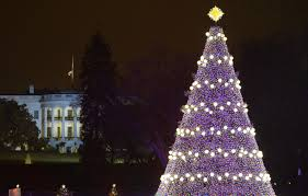 the white house tree arrives