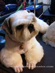 afghan hound grooming styles 30 different dog grooming styles dog grooming styles fur and dog