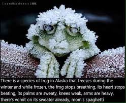 Fact Frog Meme - interesting frog fact funny pics memes captioned pictures