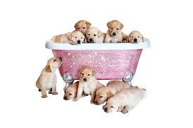 diamond bathtub the diamond bathtub