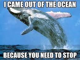 You Need To Stop Meme - i came out of the ocean because you need to stop whaleeee meme