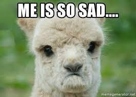 Alpaca Meme - sad alpaca meme generator