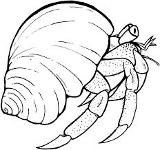 hermit crab coloring pages jpg 922 866 pixels amphibians u0026 sea