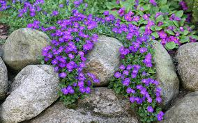 Rock Garden Cground How To Build And Plant An Alpine Rock Garden Shallow Rock And