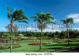 Hilo Flowers - hawaii big island hilo nani maui gardens flowers and green