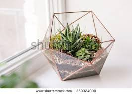 terrarium stock images royalty free images u0026 vectors shutterstock