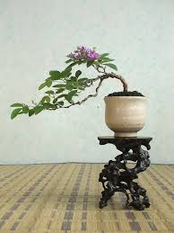 juniper bonsai tree meaning home decor and design