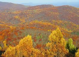 fall colors blue ridge muse