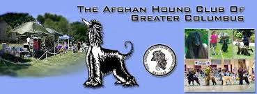 afghan hound puppies ohio afghan hound club of greater columbus home facebook