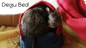 Hamster Bed How To Make A Degu Gerbil Hamster Bed Youtube